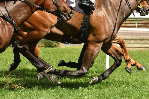 Horse racing action, hooves, legs and grass